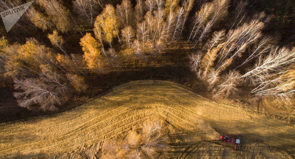俄目前已收穫1.236億噸穀物 比上年同期增加6.9%