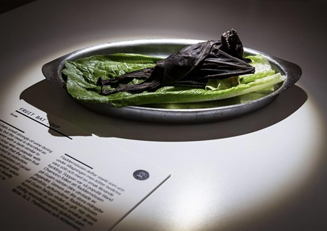 恶心食品博物馆:东南亚美味蝙蝠干