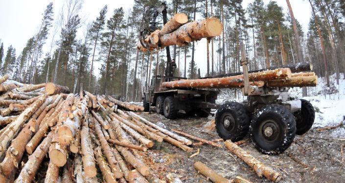 让中国公司参与俄森林长期租赁对俄罗斯是否有利?