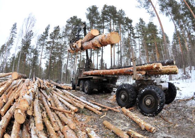 俄中兩國投資人計劃在遠東建工業園從事木材深加工