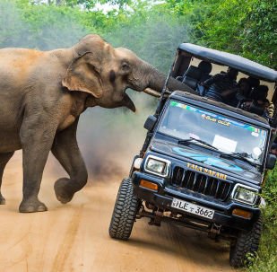金龟国际野生自然节最佳摄影作品
