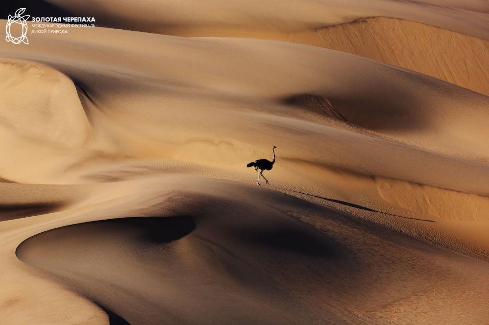 金龜國際野生自然節最佳攝影作品