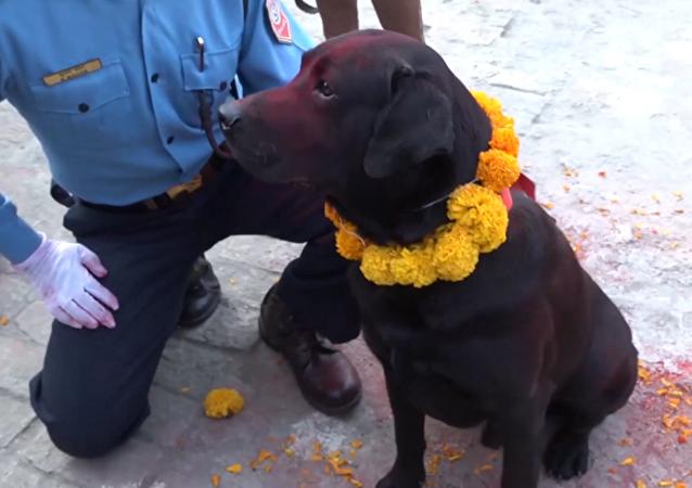 尼泊尔警察向警犬致敬