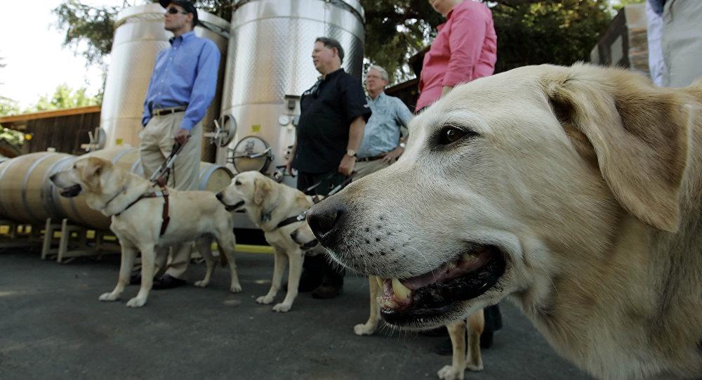 科学家称已教会狗来根据气味判断疟疾