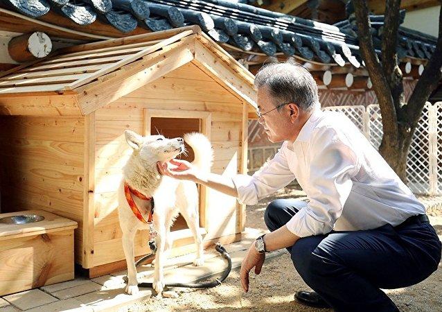金正恩贈給韓國總統的豐山犬生下六隻小狗崽