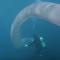 新西蘭潛水者遇巨型深海蠕蟲