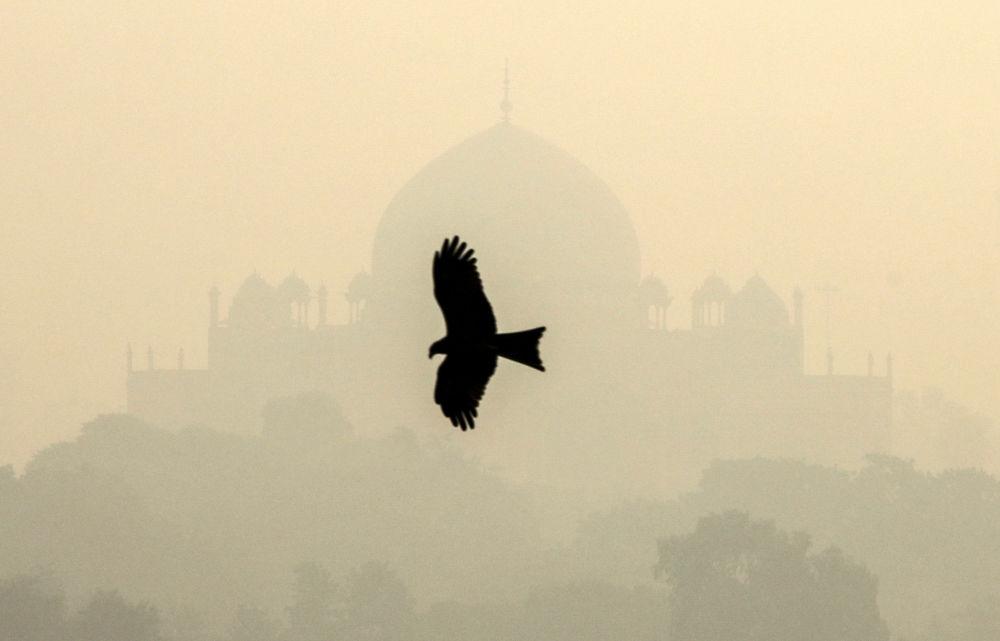 在印度新德里「胡馬雍陵」旁的鳥