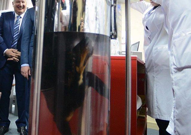 科學家向羅戈津展示俄羅斯的液體呼吸技術