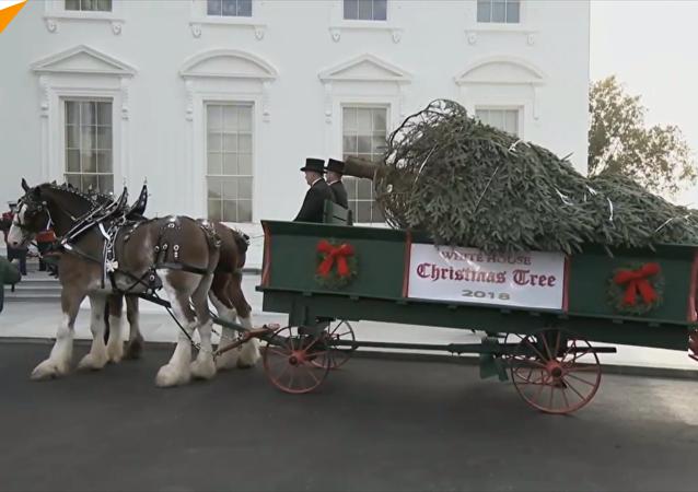 特朗普在白宫迎接圣诞树