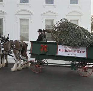特朗普在白宮迎接聖誕樹