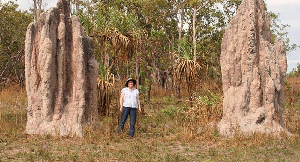 巴西現大片白蟻丘 分布面積相當於英國大小