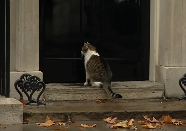 警察帮助英国首相特丽莎的猫咪回家