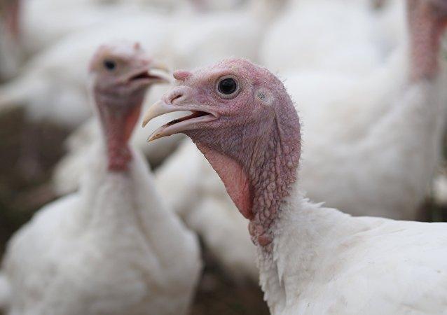 烹制火雞視頻中出現令人驚奇的視錯覺