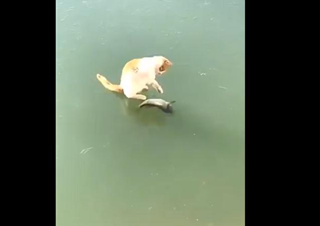 一只小猫竭尽全力试图得到冻在冰面上的鱼