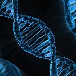 研究人員開發出用於確定壽命的是測試基因