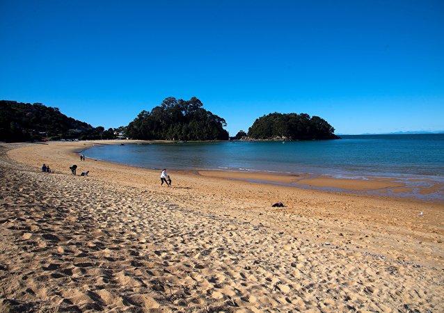 新西蘭海灘發現一個詭異的生物遺骸
