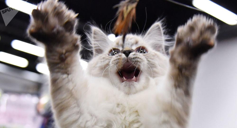 網民被貓攻擊聖誕樹視頻逗樂