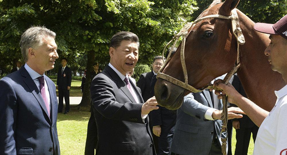阿根廷赠送中国一匹马球用马  一件意味深长的礼物