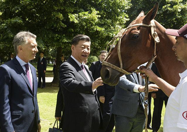 阿根廷贈送中國一匹馬球用馬  一件意味深長的禮物