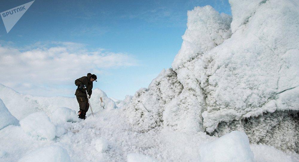 俄罗斯科学家在北极发现悬铃木和山毛榉叶片印迹