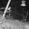 执着的老鼠跳了6个小时只为跳到喂鸟槽上