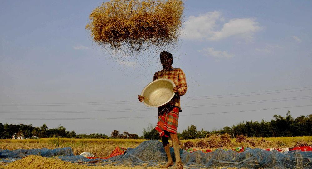 報告:世界食品生產和消費體系亟需改變