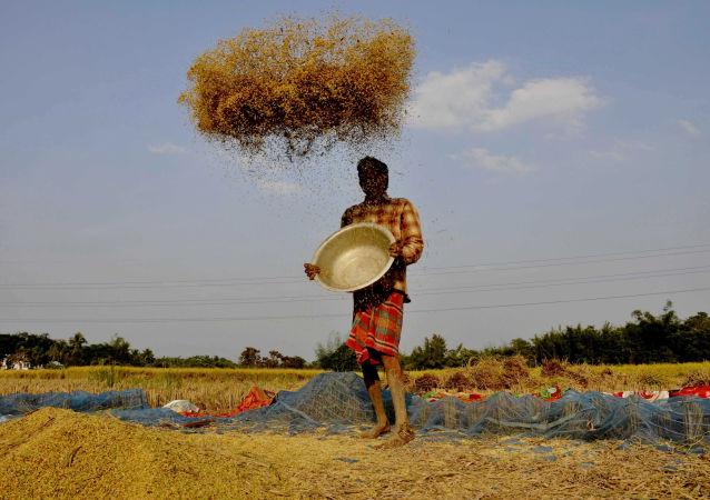 报告:世界食品生产和消费体系亟需改变