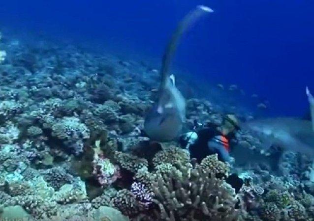 鲨鱼用牙扯下潜水员面具