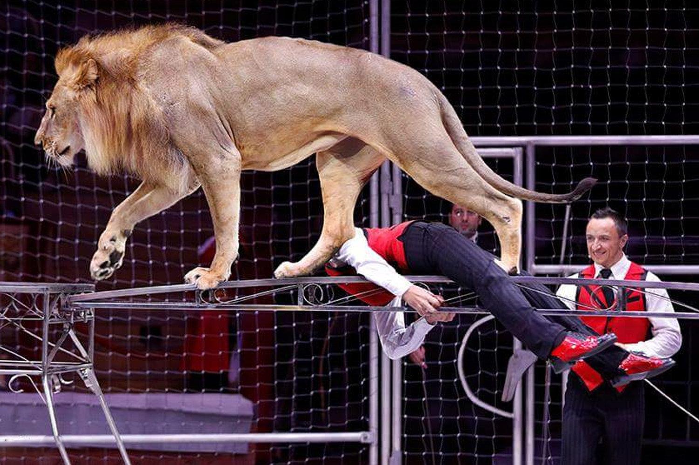 世界上最年輕的訓獅人之一鐵木兒·岡察洛夫