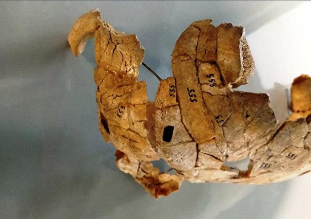 大约有8000年历史的人头骨