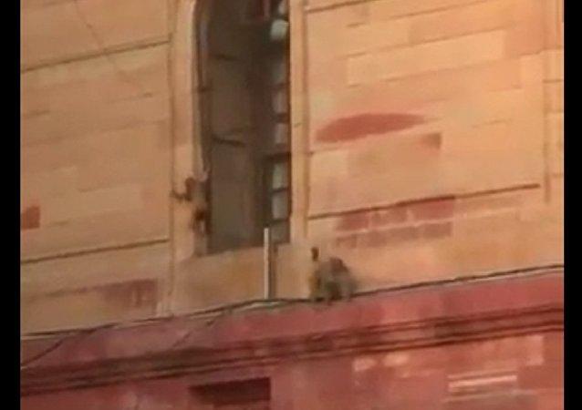 幾千猴子佔領了印度政府大樓