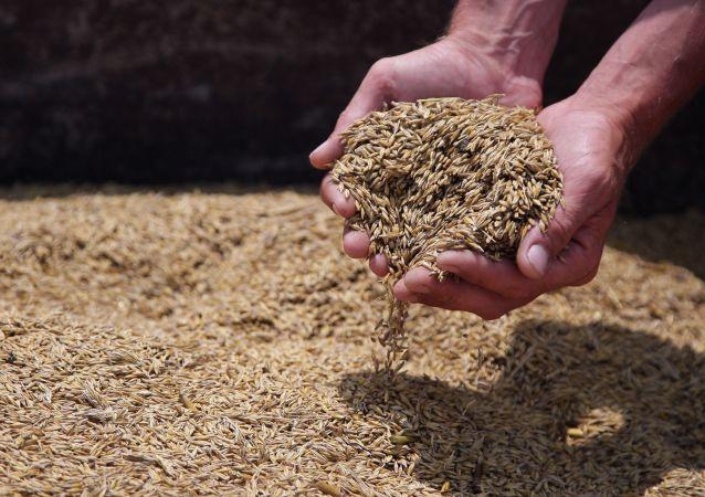 俄新西伯利亚州一批大麦首次发往韩国