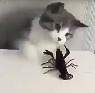 Mortal Combat: Cat Starts a Fight With Crayfish
