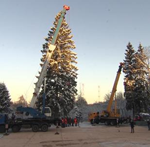 俄罗斯主新年枞树从莫斯科郊外砍回来啦!