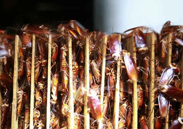 聯合國專家介紹吃昆蟲有甚麼好處