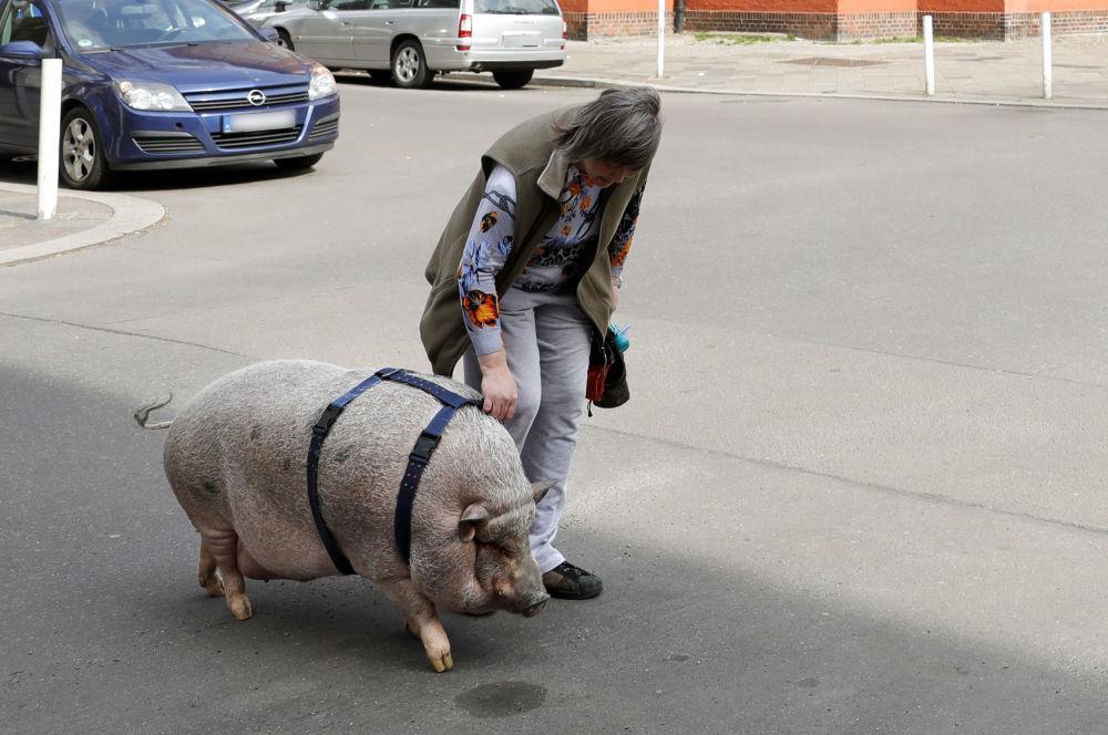 2019猪年