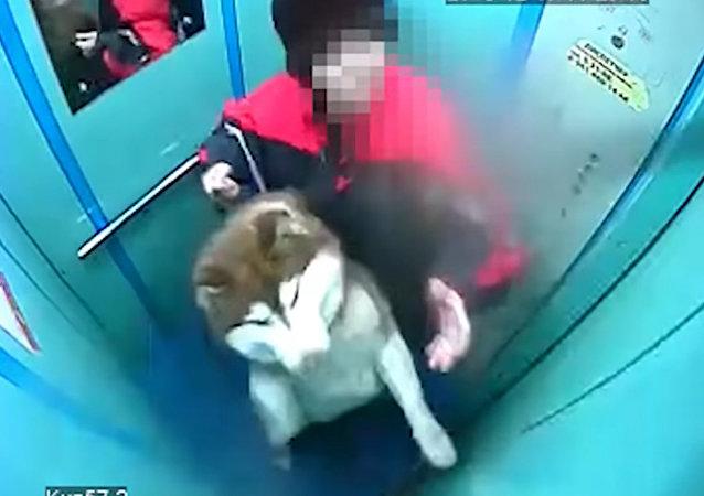 在克麦罗沃州一只狗狗差点被闷死在电梯里