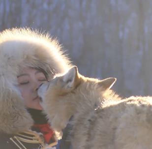 内蒙古女孩以嘴喂狼让人啧啧称道