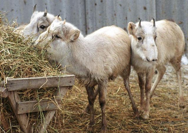 哈萨克斯坦一警察涉嫌非法射杀大量濒危动物