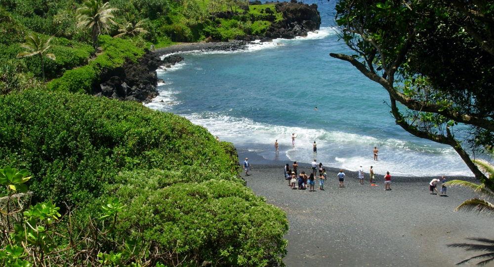 全球最後一隻夏威夷金頂樹蝸死亡