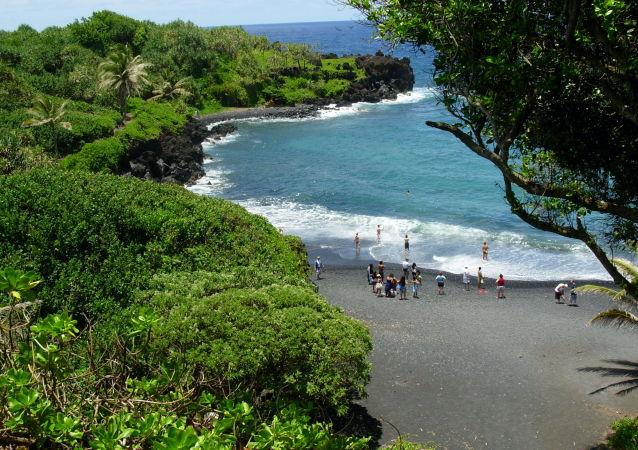 全球最后一只夏威夷金顶树蜗死亡