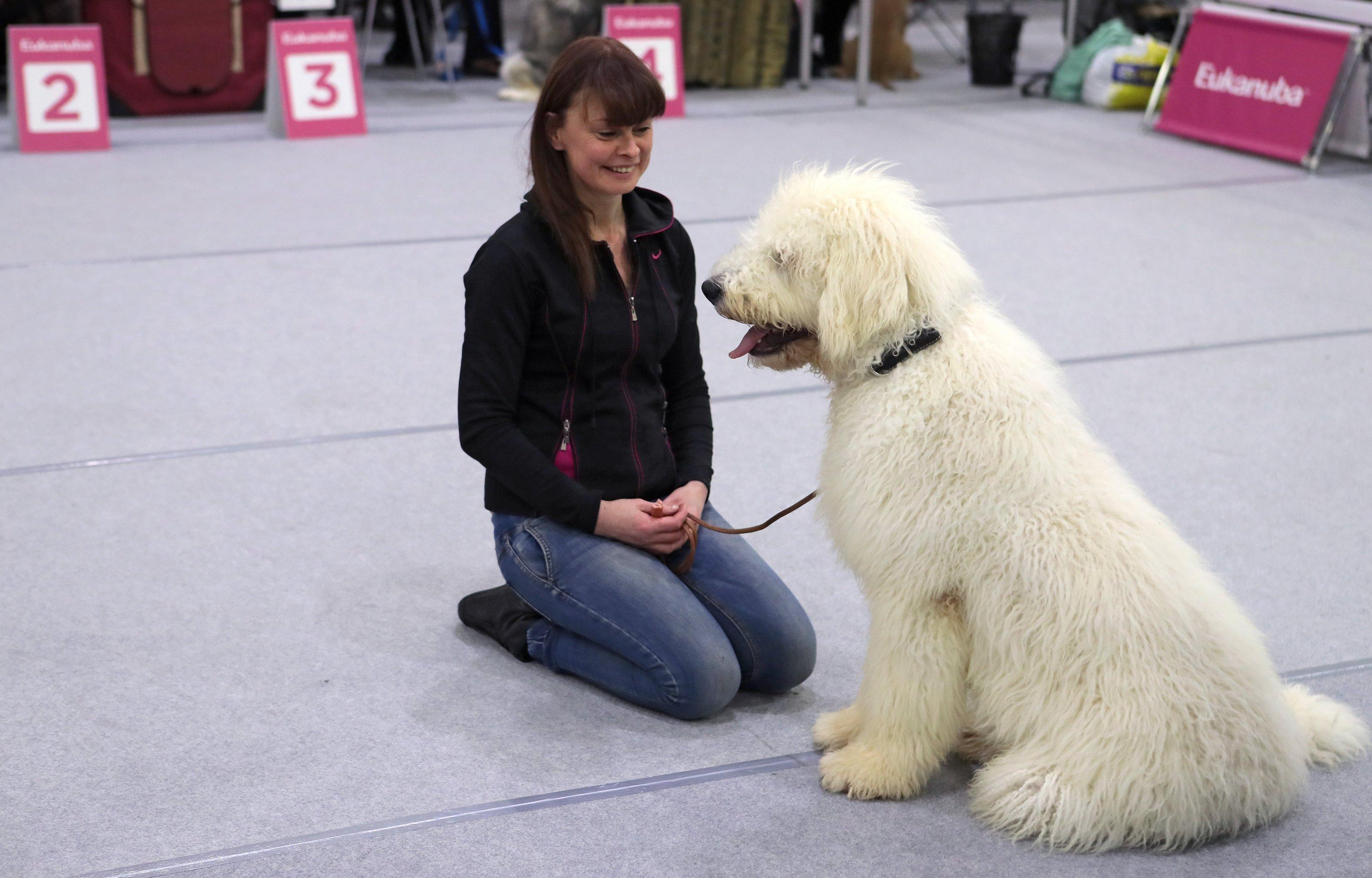 莫斯科宠物展上的南俄牧羊犬