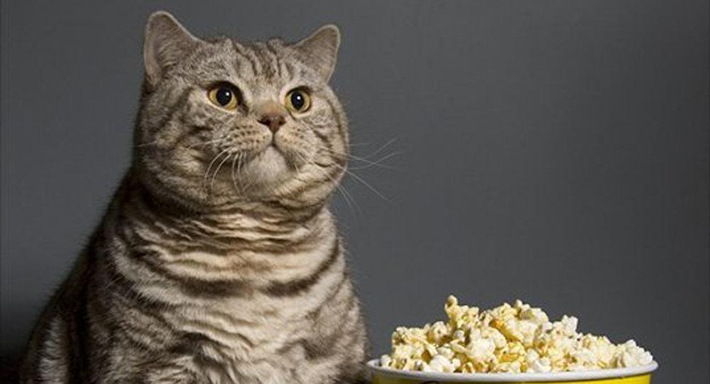 貓咪與狗分享爆米花