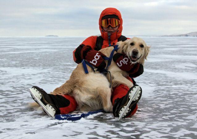 游人在贝加尔冻湖的冰上遛狗。