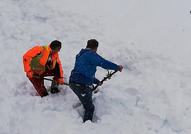 奥地利 人从雪中挖出一只山羊
