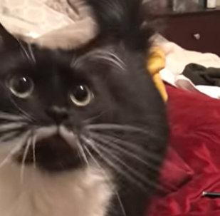 猫咪与主人交谈 暖心画面让观众动容