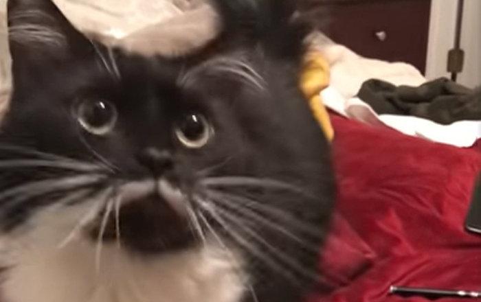 貓咪與主人交談 暖心畫面讓觀眾動容