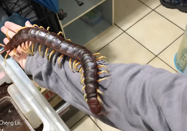 一名中國大學生製作巨型蜈蚣爬身上的視頻
