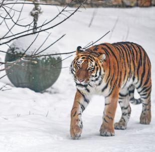 俄羅斯47地設立野生動物康復中心