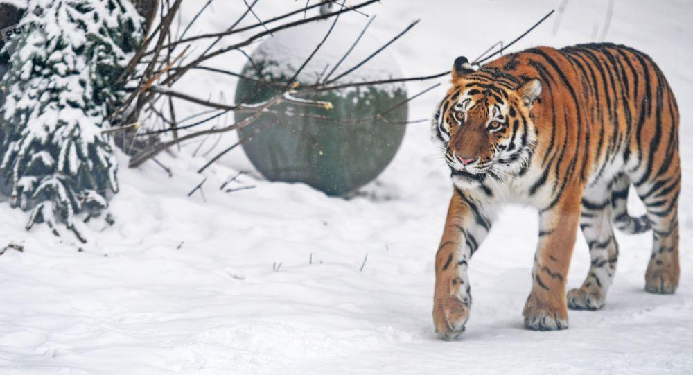 俄罗斯47地设立野生动物康复中心